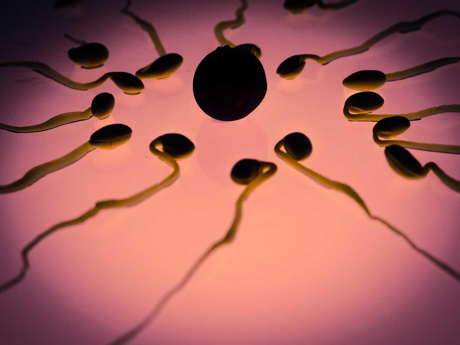 A su salud - La reproducción asistida y los nuevos tipos de familia - 29/01/21   - Escuchar ahora
