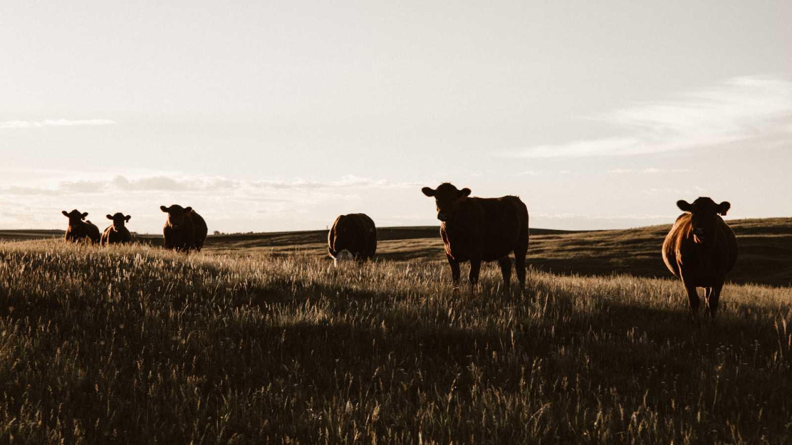 Rebelión en la granja - escuchar ahora