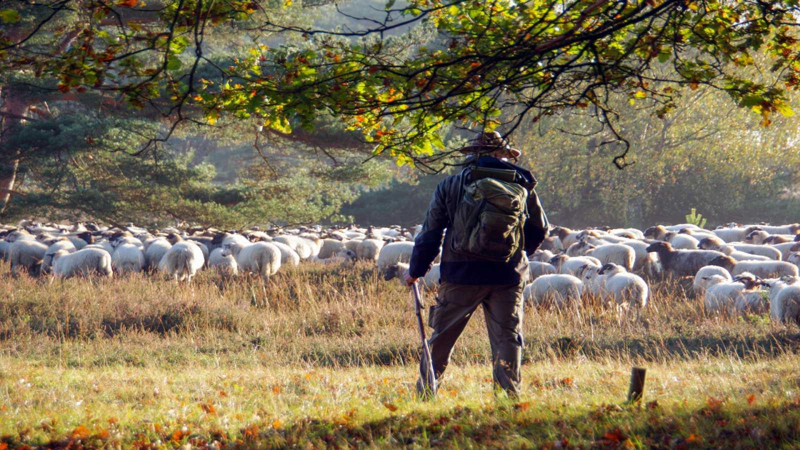 Contando cuentos en Radio 5 - El pastor - Capítulo 1 - 03/02/21 - Escuchar ahora