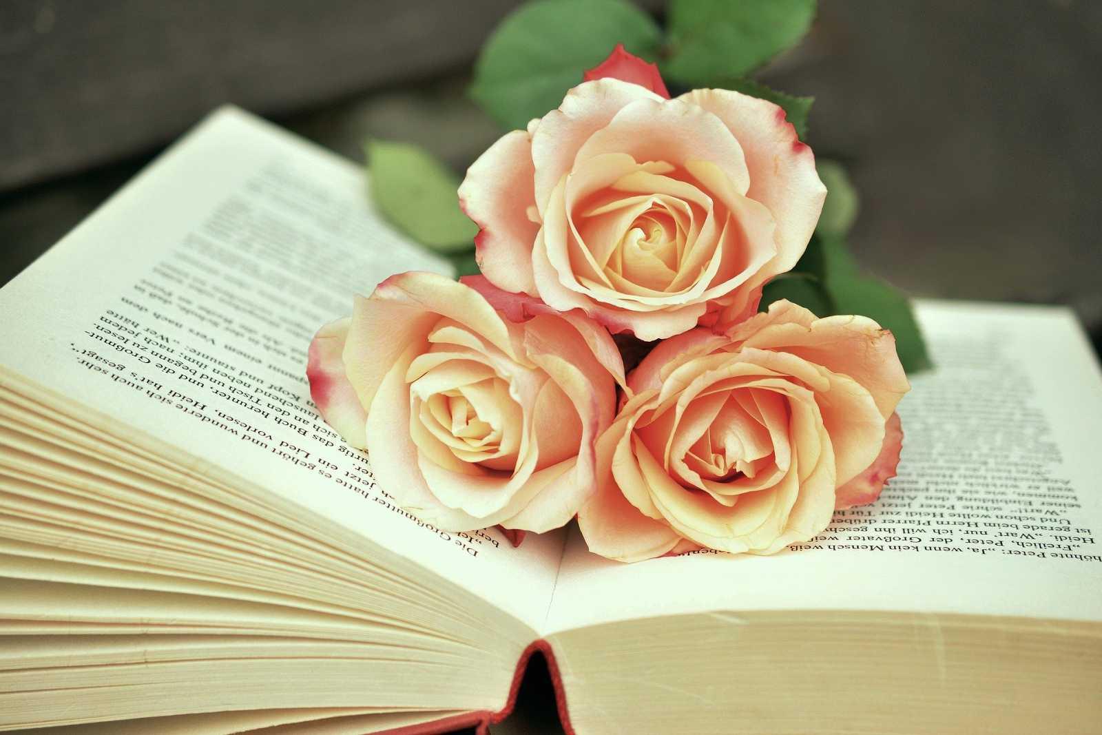 Club Dante - L'amor a la literatura