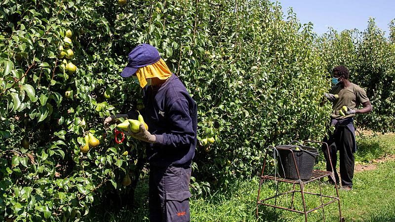 Más cerca - Viviendas dignas para los temporeros de la fruta en Aragón - Escuchar ahora