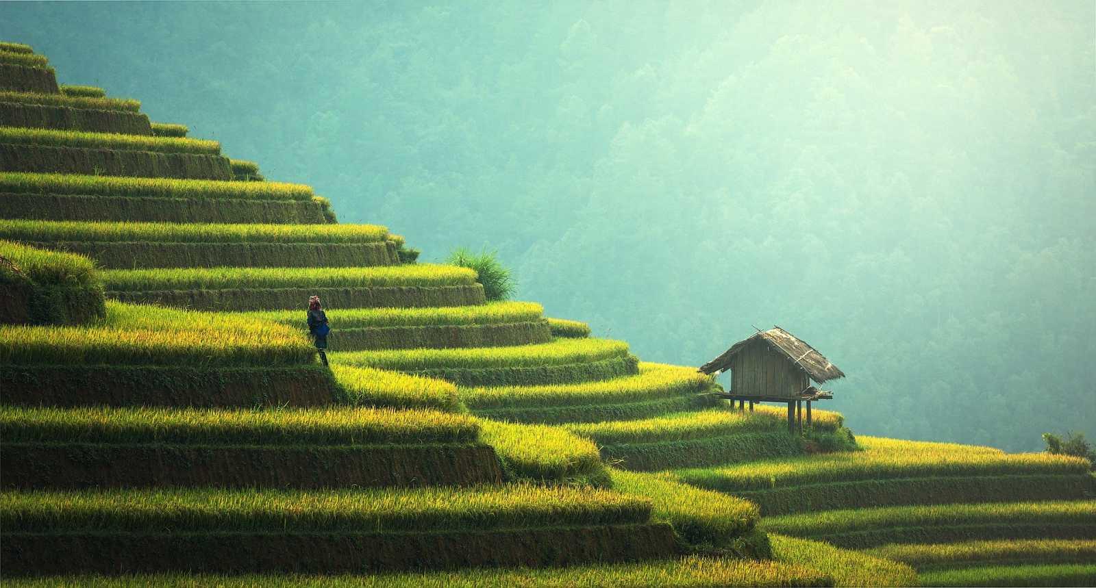 Vida verda - Emergència climàtica - Aigua, agricultura, aliments, bosc i planificació territori