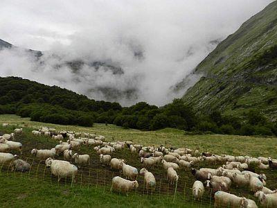 Món Rural - Escola de pastors