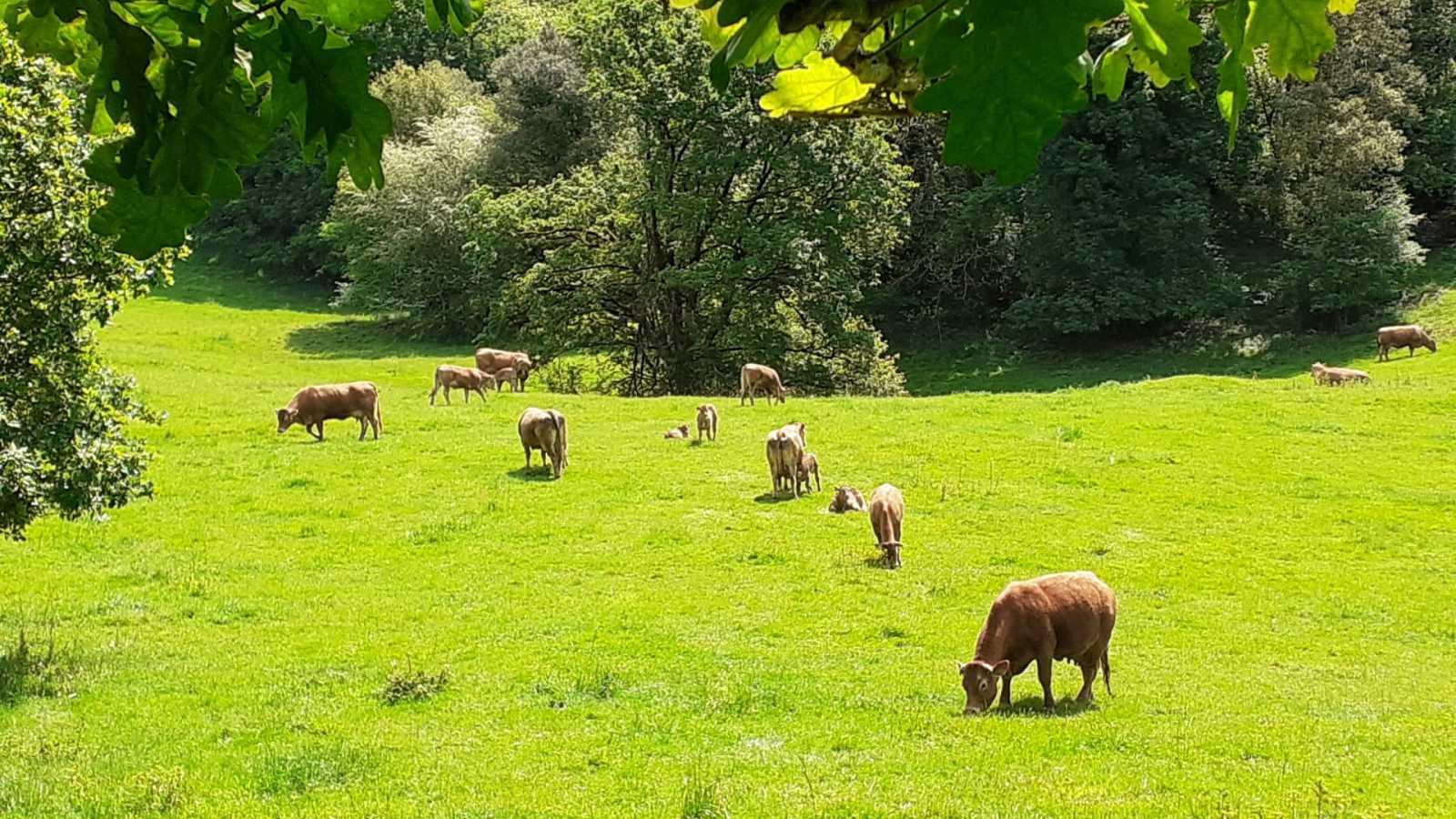 "Por tres razones - ""Aprender a ser pastora, empresaria del siglo XXI"" - Escuchar ahora"