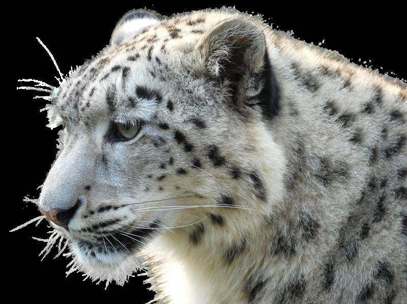 Animales y medio ambiente - Documentales - 27/02/21 - Escuchar ahora