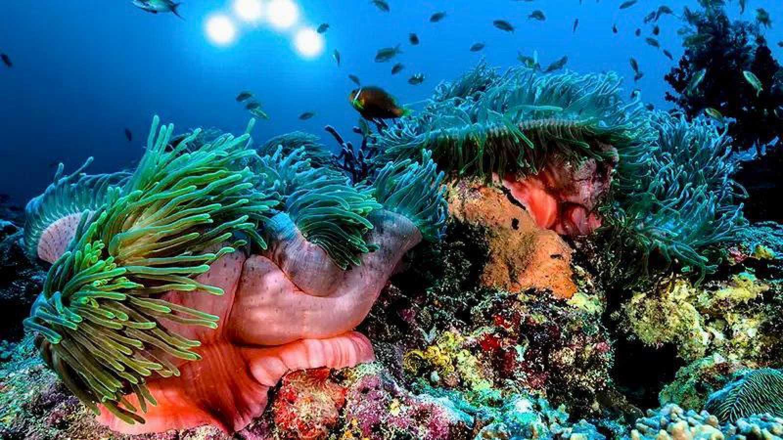 No es un día cualquiera - Conservación de la fauna - Patricia F. de Lis - Planeta