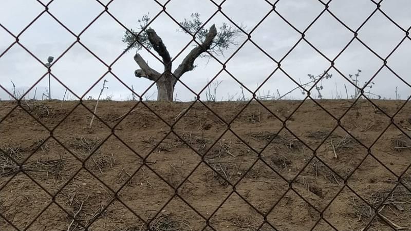 El bosque habitado - Justicia EcoSocial - 28/02/21 - escuchar ahora