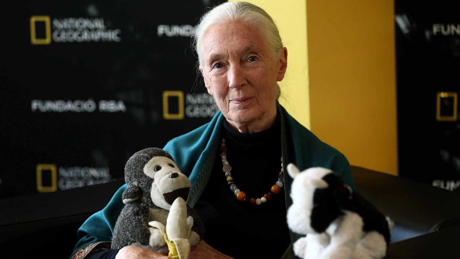 """Por tres razones - El proyecto """"Raíces y brotes"""" de Jane Goodall en España - Escuchar ahora"""