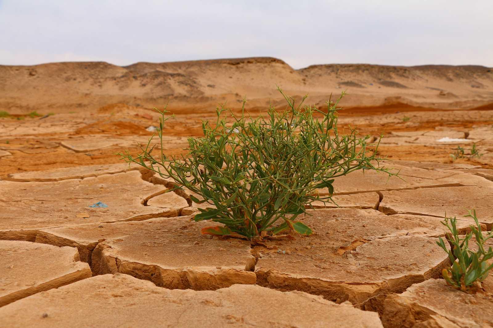 Vida verda/Emergència climàtica: superat el punt de capgirell climàtic global?