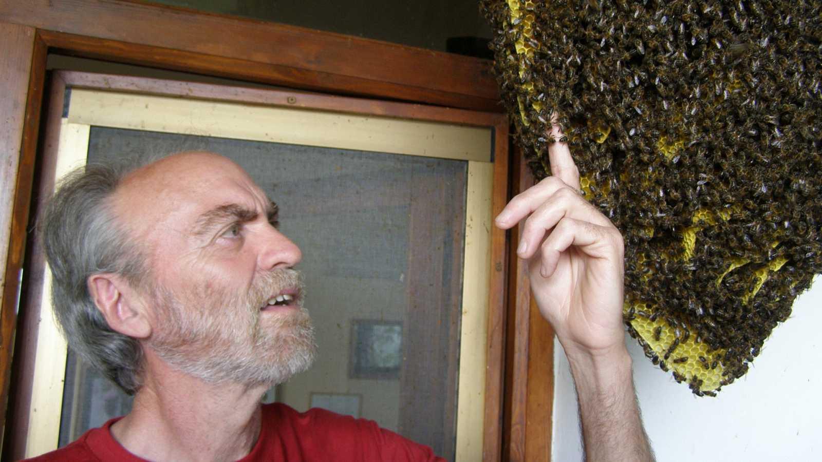 Gente despierta - Cosas de la vida, de las abejas, con Luismi Pascual - Escuchar ahora