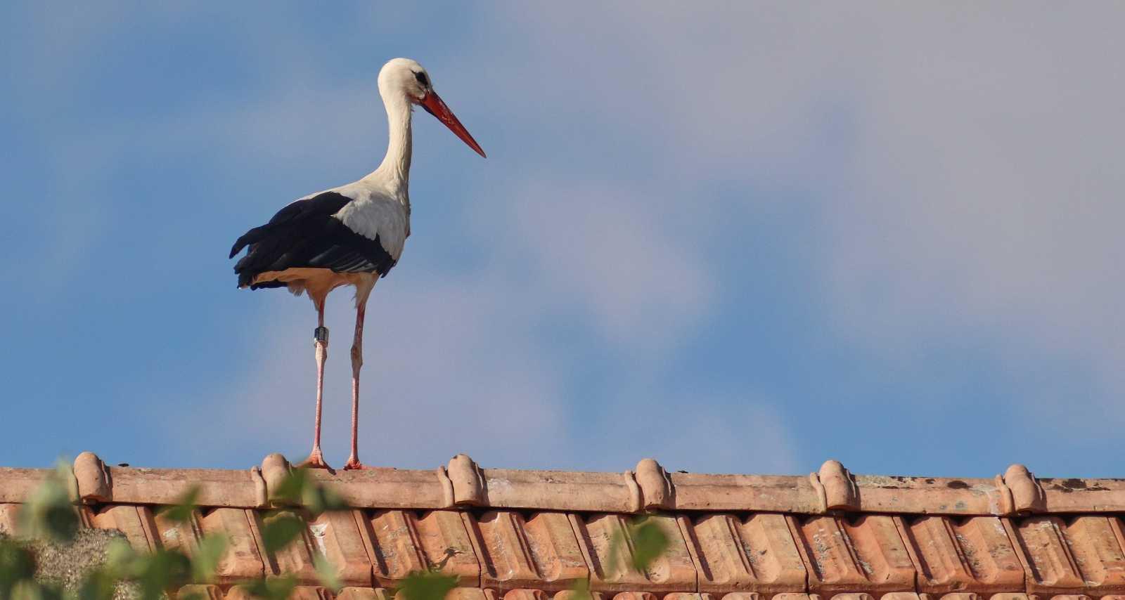 Animales y medio ambiente - Cigüeñas perdidas - 07/03/21 - Escuchar ahora