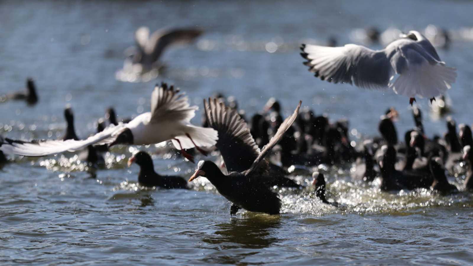 En Directe a Ràdio 4 - Vida verda - Menys ocells hivernals al Delta de l'Ebre