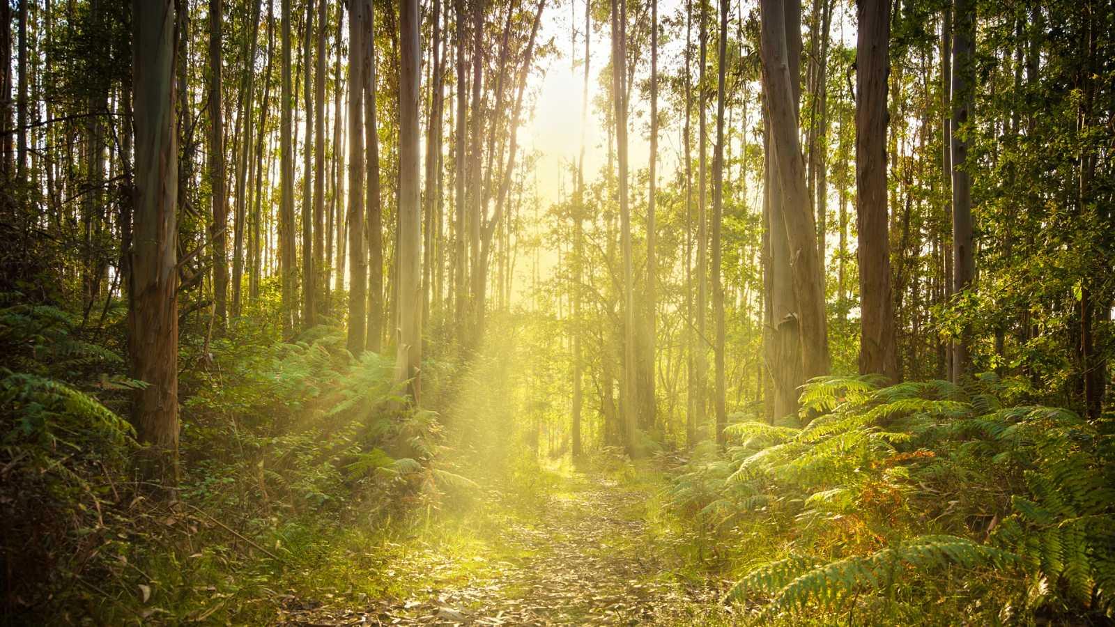 En clave Turismo - 21 de marzo, Día Internacional de los Bosques - 16/03/21 - escuchar ahora
