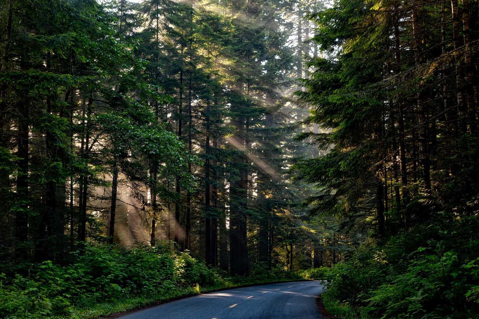 Reportajes en R5  -  Los bosques y las dehesas ayudan a luchar contra el cambio climático. - 16/03/21 - Escuchar ahora