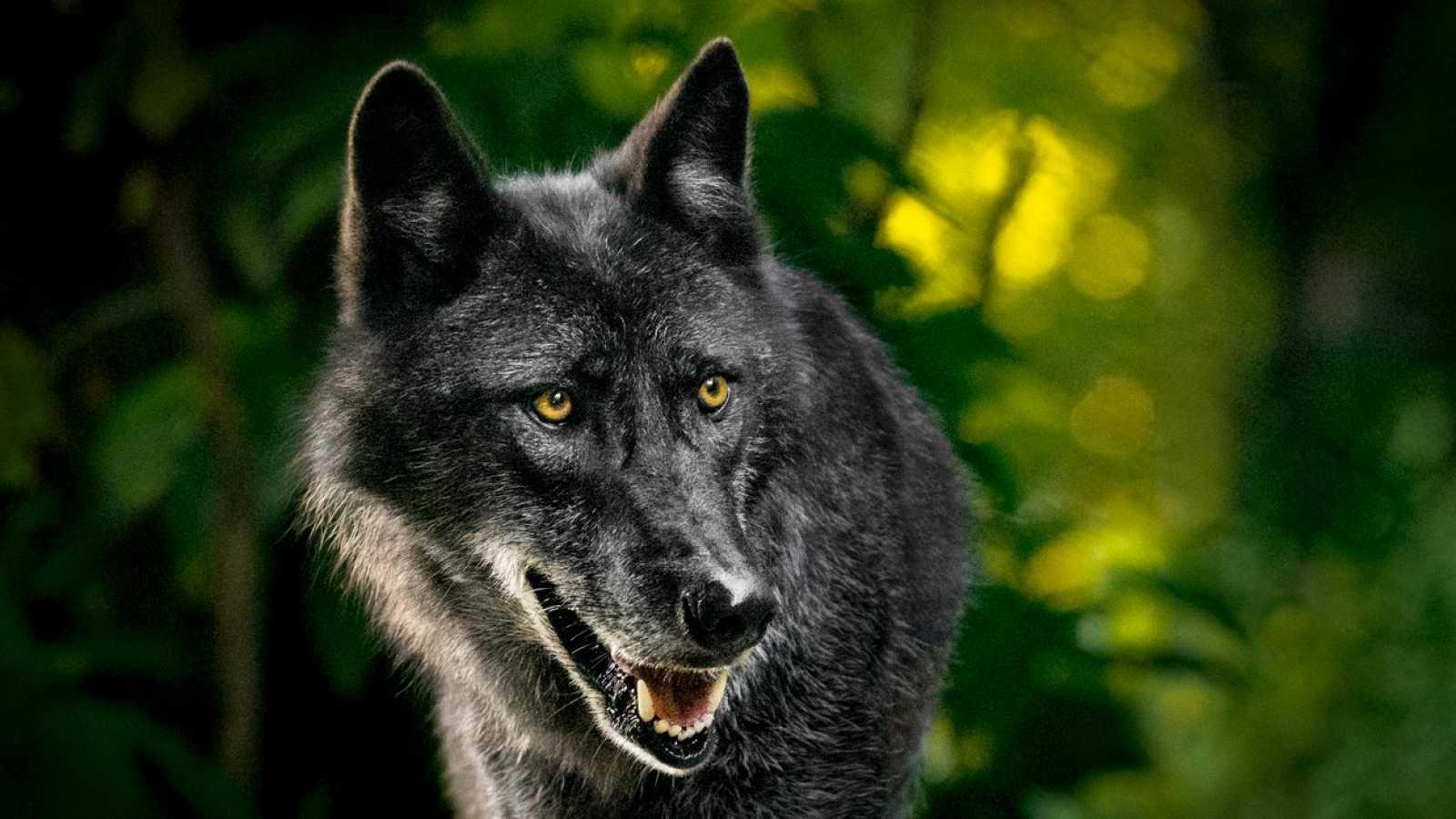 Gran Repertorio - PROKOFIEV: Pedro y el Lobo - 24/03/21 - escuchar ahora