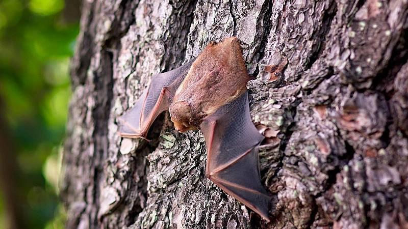 El laboratorio de JAL - Los murciélagos son vitales - 25/03/21 - Escuchar ahora
