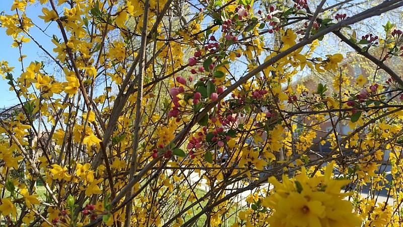 El bosque habitado - La ruidosa primavera - 28/03/21 - escuchar ahora