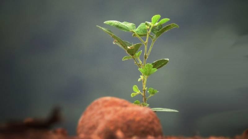 Mundo solidario - Reforesta: está en tus manos, planta bosques - 04/04/21 - escuchar ahora