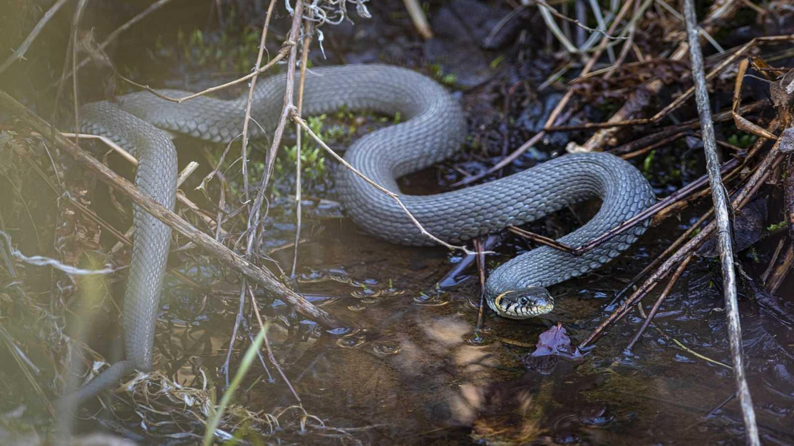 Esto me cuentan - El cazador y la serpiente - Escuchar ahora