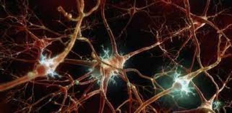 Neuronas que reparan daños en vista y oido - 09/04/21 - Escuchar ahora