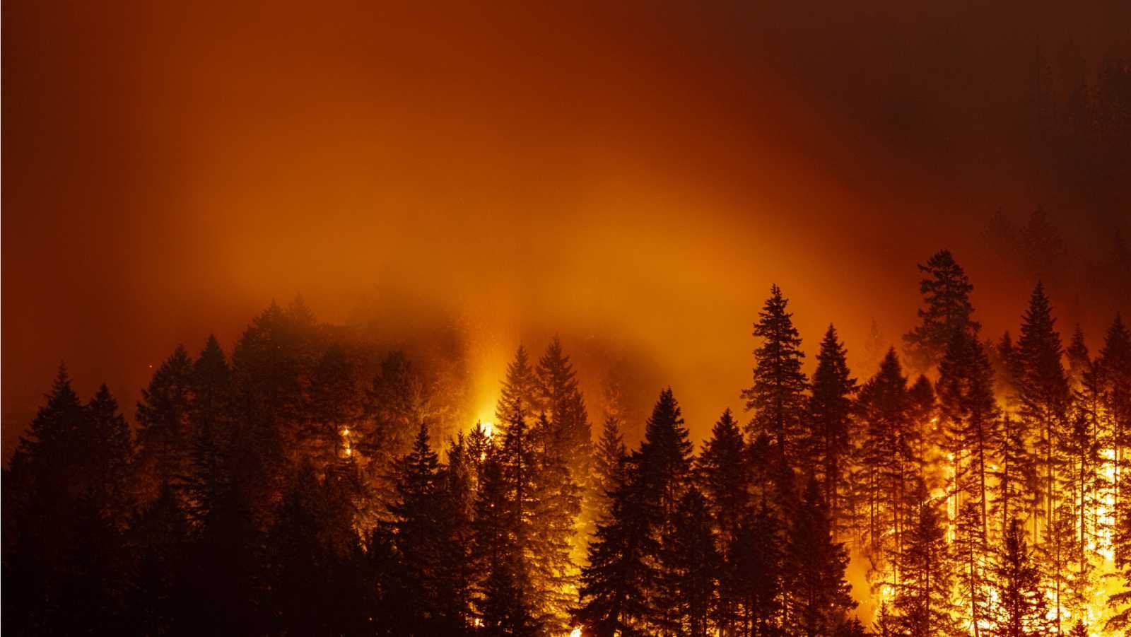Alianza 2030 - Arbaria: Prevención y extinción de incendios forestales - 11/04/2021 - Escuchar ahora