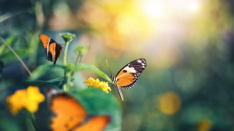 Capriccio - Sinfonía Primavera, de Schumann - 14/04/21 - escuchar ahora