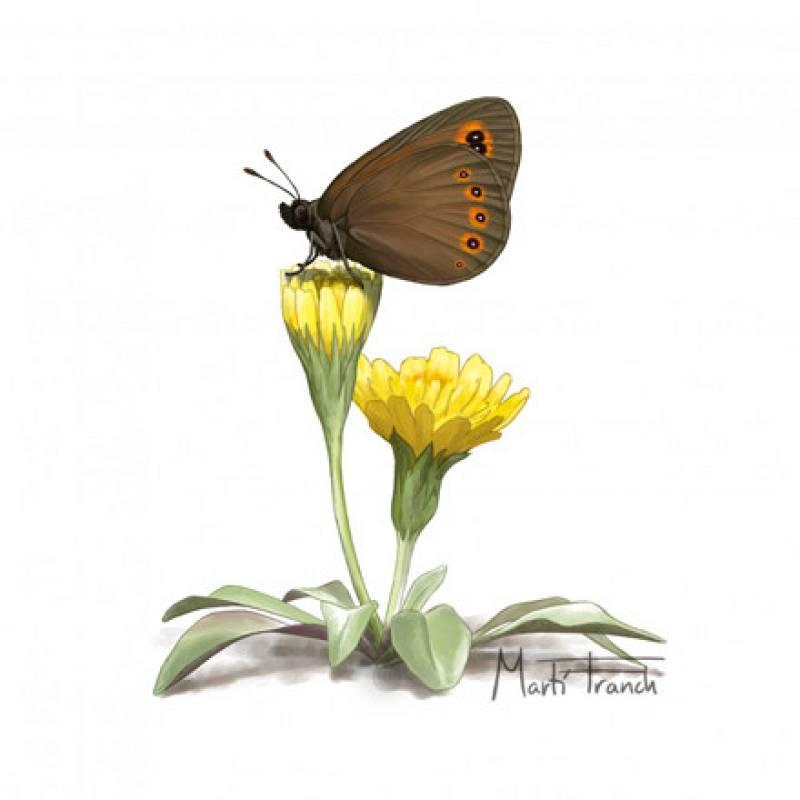 En Directe a Ràdio 4/Vida Verda - Microreserves de papallones