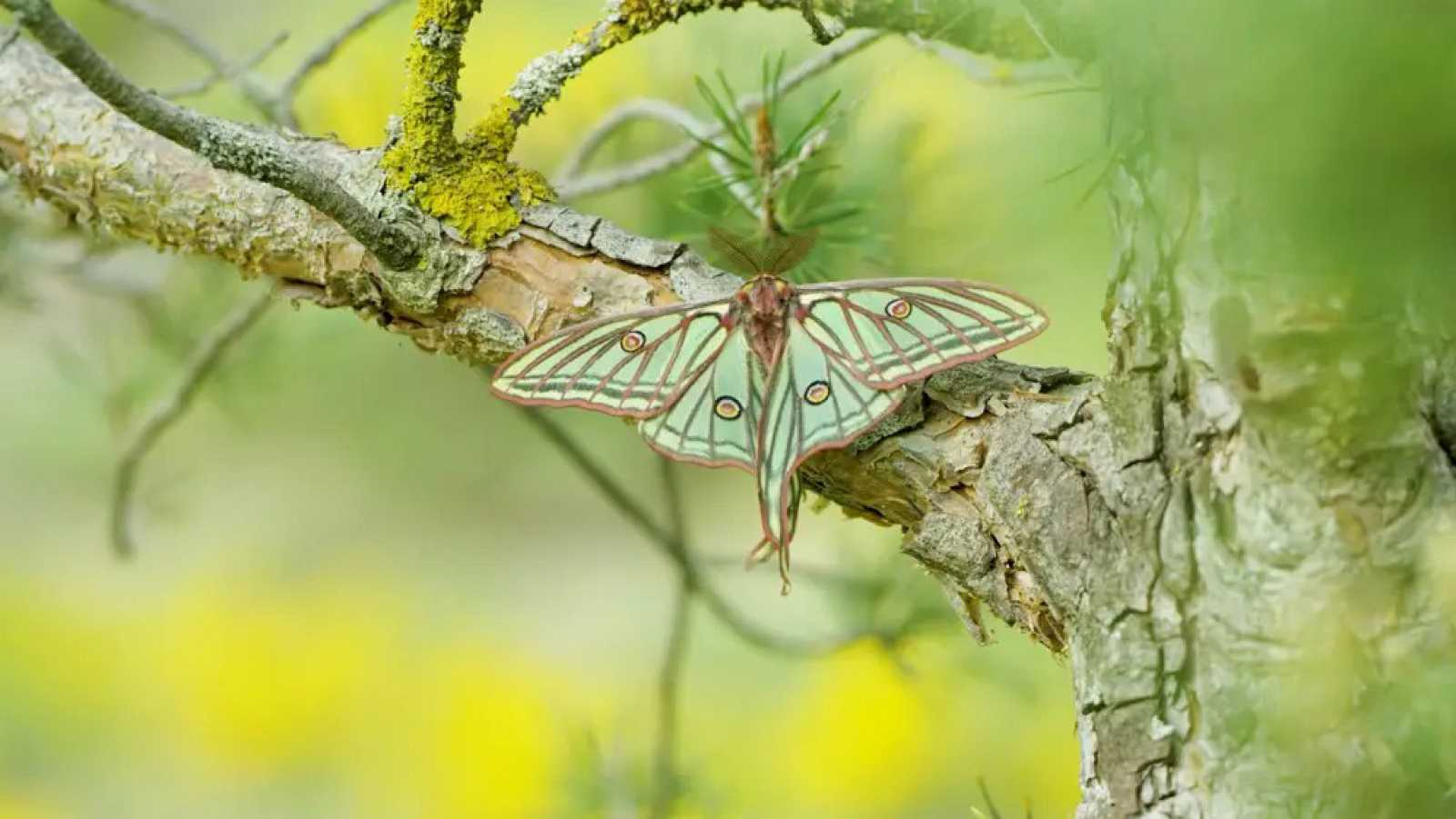Hora América - 'Natura Bizia', documental sobre biodiversidad del País Vasco y Navarra - escuchar ahroa