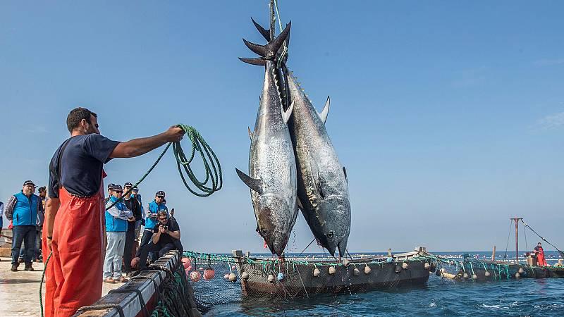 Españoles en la mar - Los griegos degustaban, en el Siglo V a.C., el atún rojo gaditano - 21/04/21 - escuchar ahora
