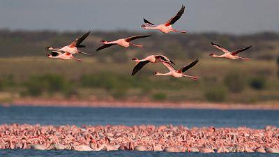Memoria de delfín - Aves migratorias: maratonianas del aire - 03/05/21 - escuchar ahora