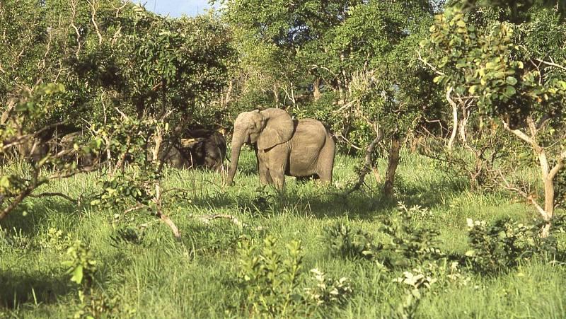 14 horas - La caza furtiva en África: mientras haya alguien dispuesto a pagar, habrá alguien dispuesto a matar - Escuchar ahora