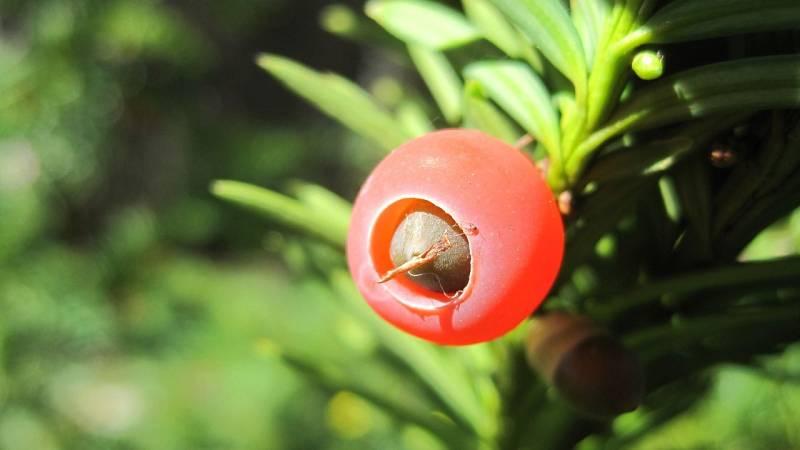 El bosque habitado - La cultura del árbol y sus raíces. Con Ignacio Abella - 02/05/21 - escuchar ahora