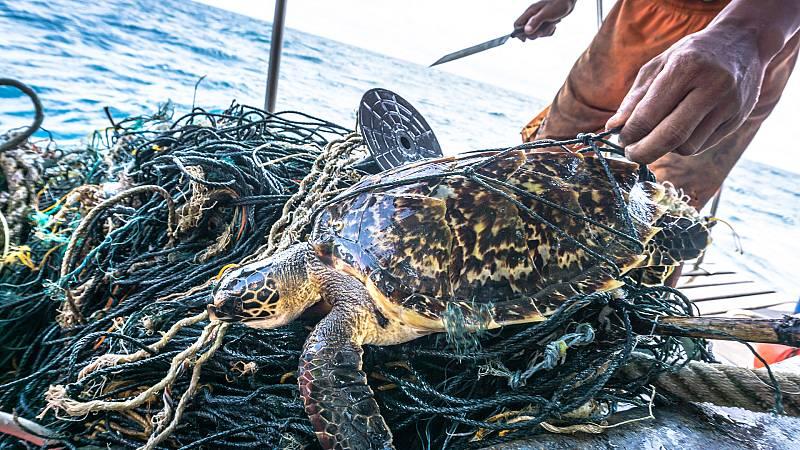 Españoles en la mar - Evitando las capturas accidentales en la pesca de especies vulnerables - 05/05/21 - escuchar ahora