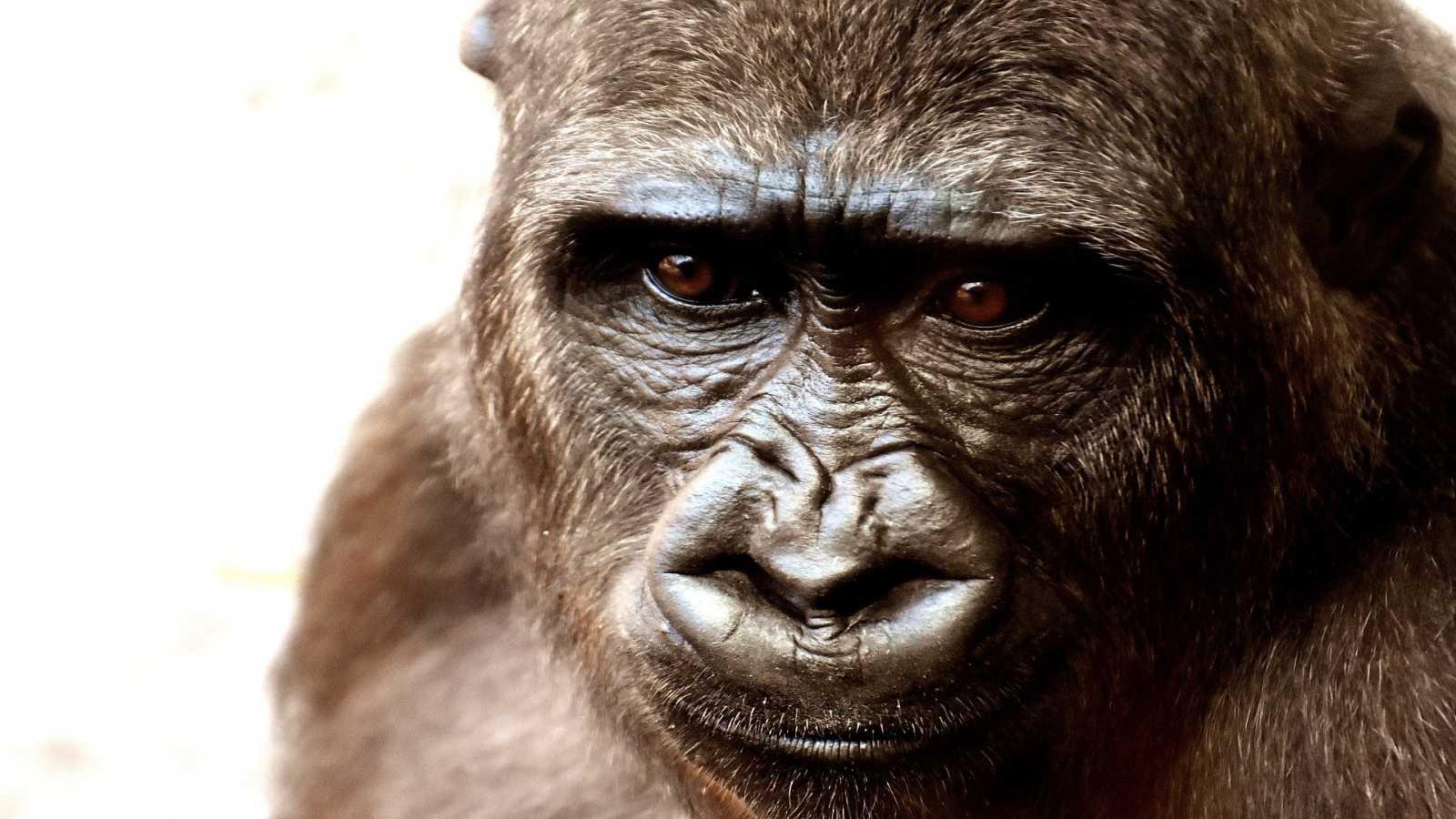 Reserva natural - Tráfico ilegal de vida salvaje - 06/05/21 - Escuchar ahora