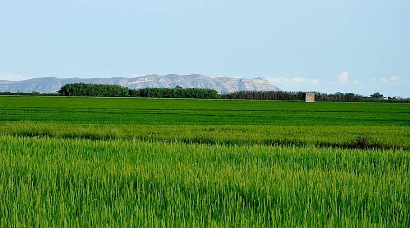 Cullera, capital gastronómica del arroz - ESCUCHAR AHORA