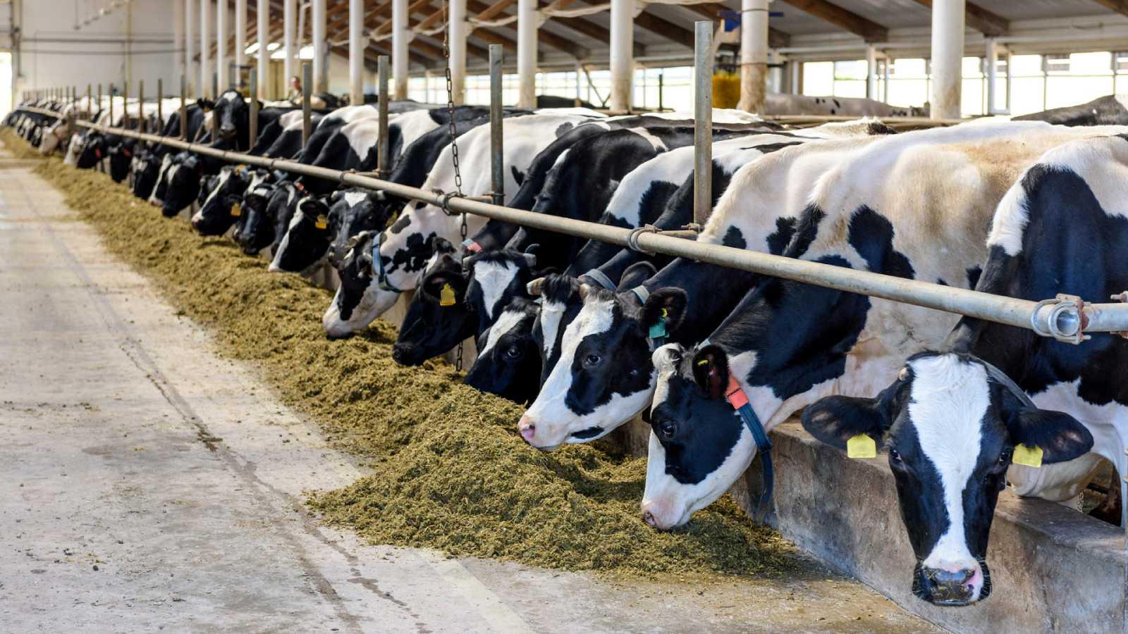 España a las 8 Fin de Semana - Foco España: La macrogranja en Noviercas no convence a ganaderos y ecologistas - Escuchar ahora