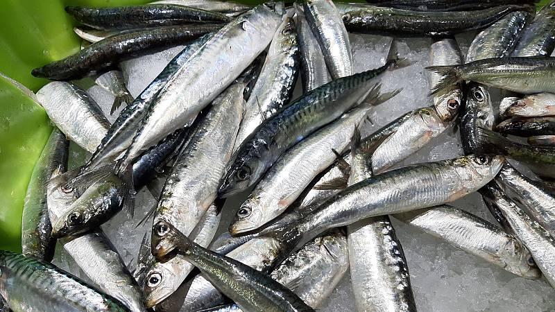 Españoles en la mar - Prevenir la diabetes tipo 2 consumiendo sardinas de forma regular - 14/05/21 - escuchar ahora