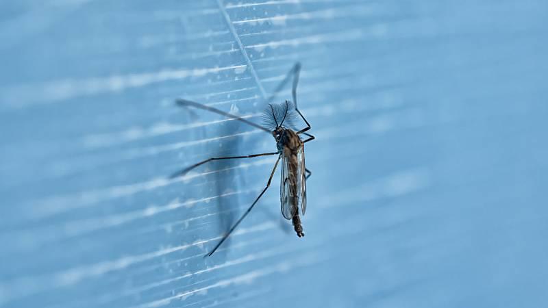 Por tres razones - ¿Se puede prevenir un nuevo brote del virus del Nilo? - 28/05/21 - escuchar ahora