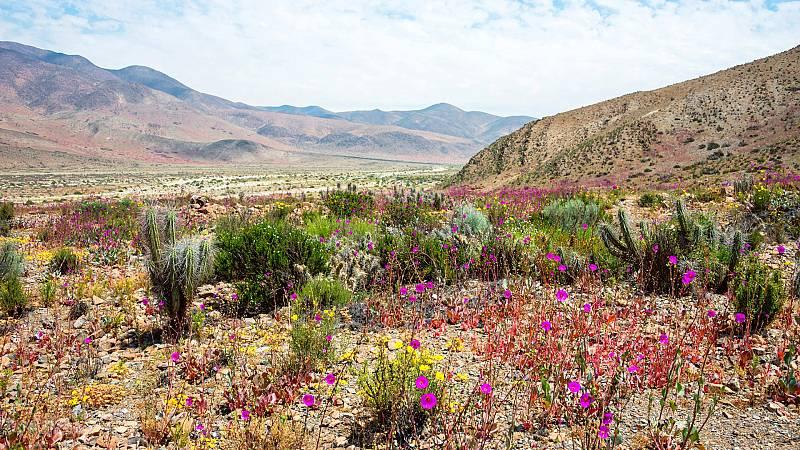 Nómadas - Atacama y el milagro de las flores - 29/05/21 - escuchar ahora