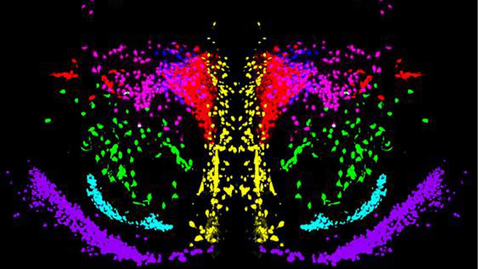 Meridiano de Turing - ¿Cómo viaja la oxitocina por nuestro cerebro? - Escuchar ahora