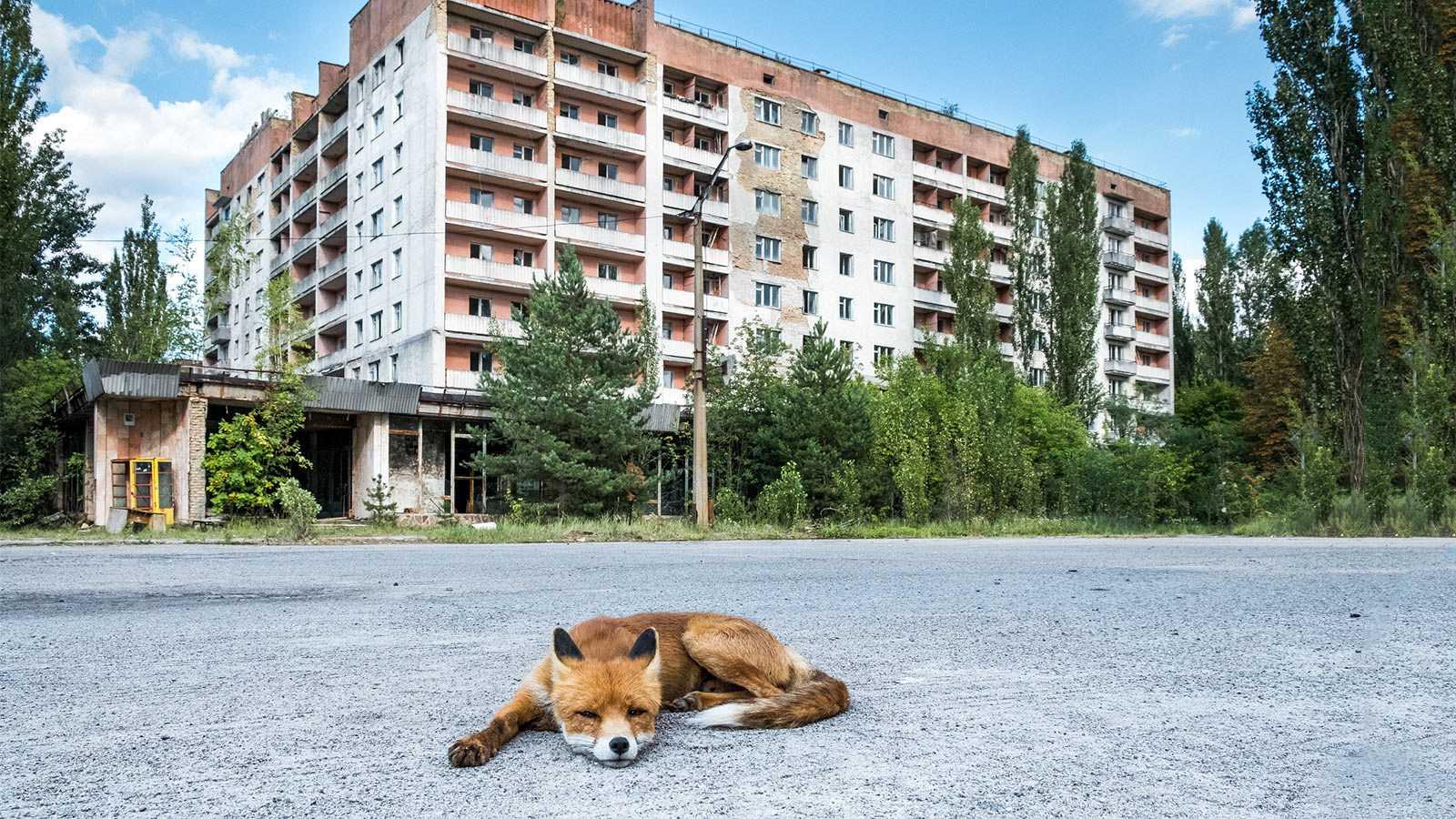 Després del col·lapse - L'acció de l'home a Txernòbil, pitjor que l'accident nuclear - 10/06/21 - escotar ara -