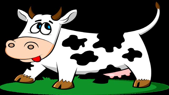 La vaca curiosa