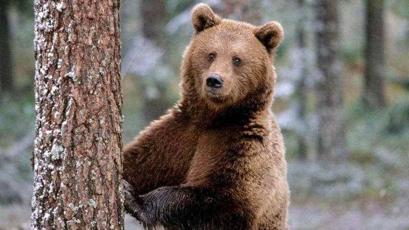 No es un día cualquiera - Comunicación animal - Patricia F. de Lis - Planeta 2050 - 12/06/21 - Escuchar ahora