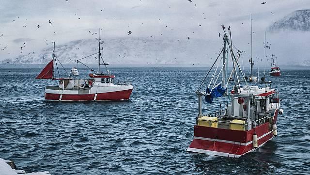 Noruega recorta la cuota de bacalao en el Ártico