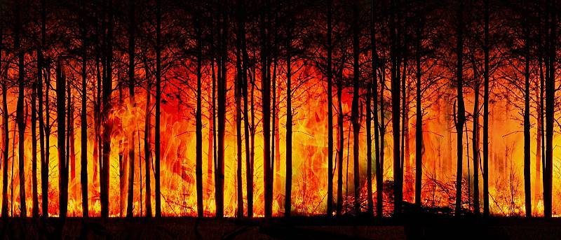 """De boca a orella - """"Els boscos estan estressats"""""""