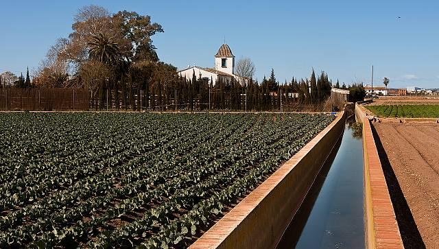 La Huerta de Valencia es patrimonio agrícola mundial