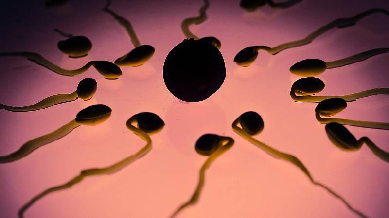 Con bata blanca - Una de cada seis parejas tiene problemas de fertilidad - 02/07/21 - escuchar ahora