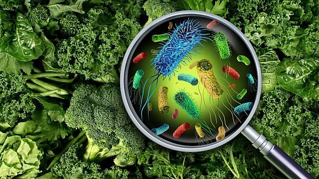 Las bacterias de los alimentos y cómo afectan a nuestro orga