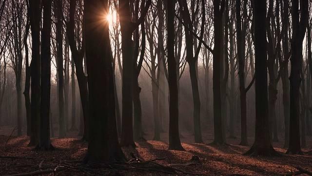 El bosque aterrador
