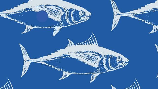 Tuna Vigo 2021